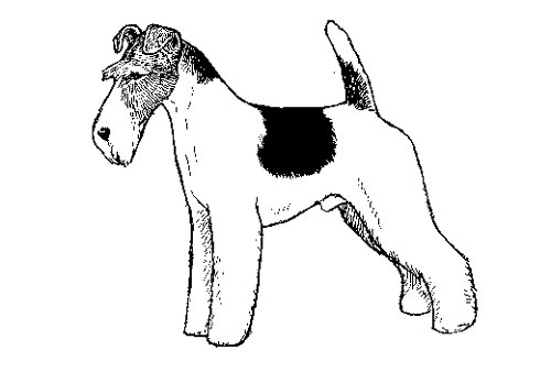 Breed Standards : Wire Fox Terrier | United Kennel Club (UKC)