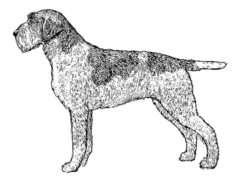 UKC Breed Standards: Wire-Haired Pointing Griffon