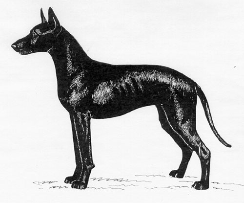 UKC Breed Standards: Xoloitzcuintli