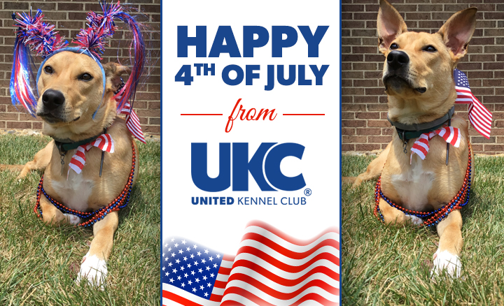 UKC 4th of July