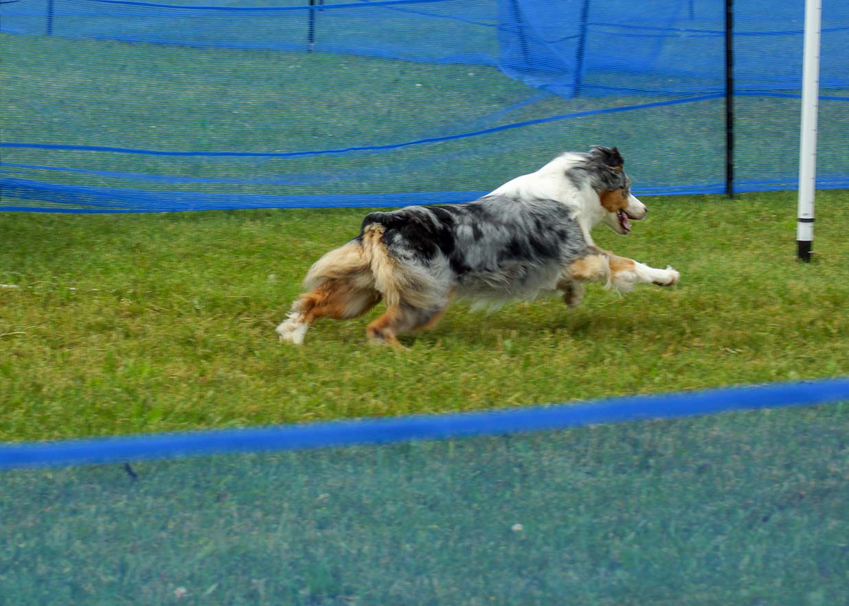 Precision Coursing