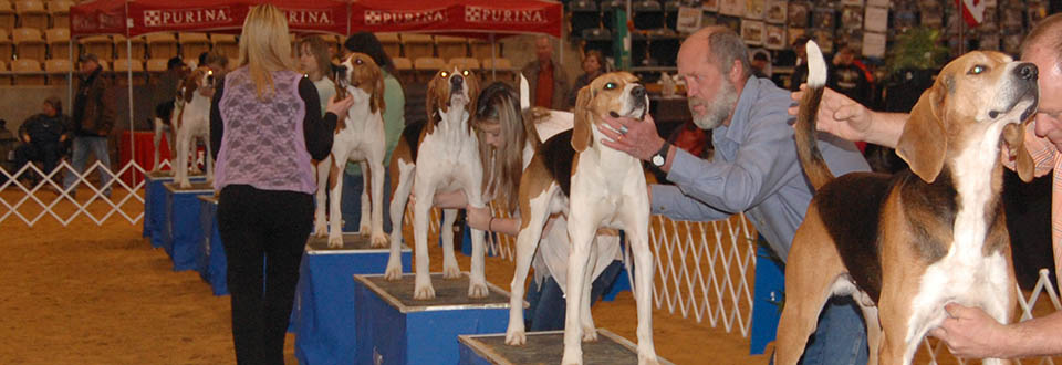 Coonhound Bench Shows