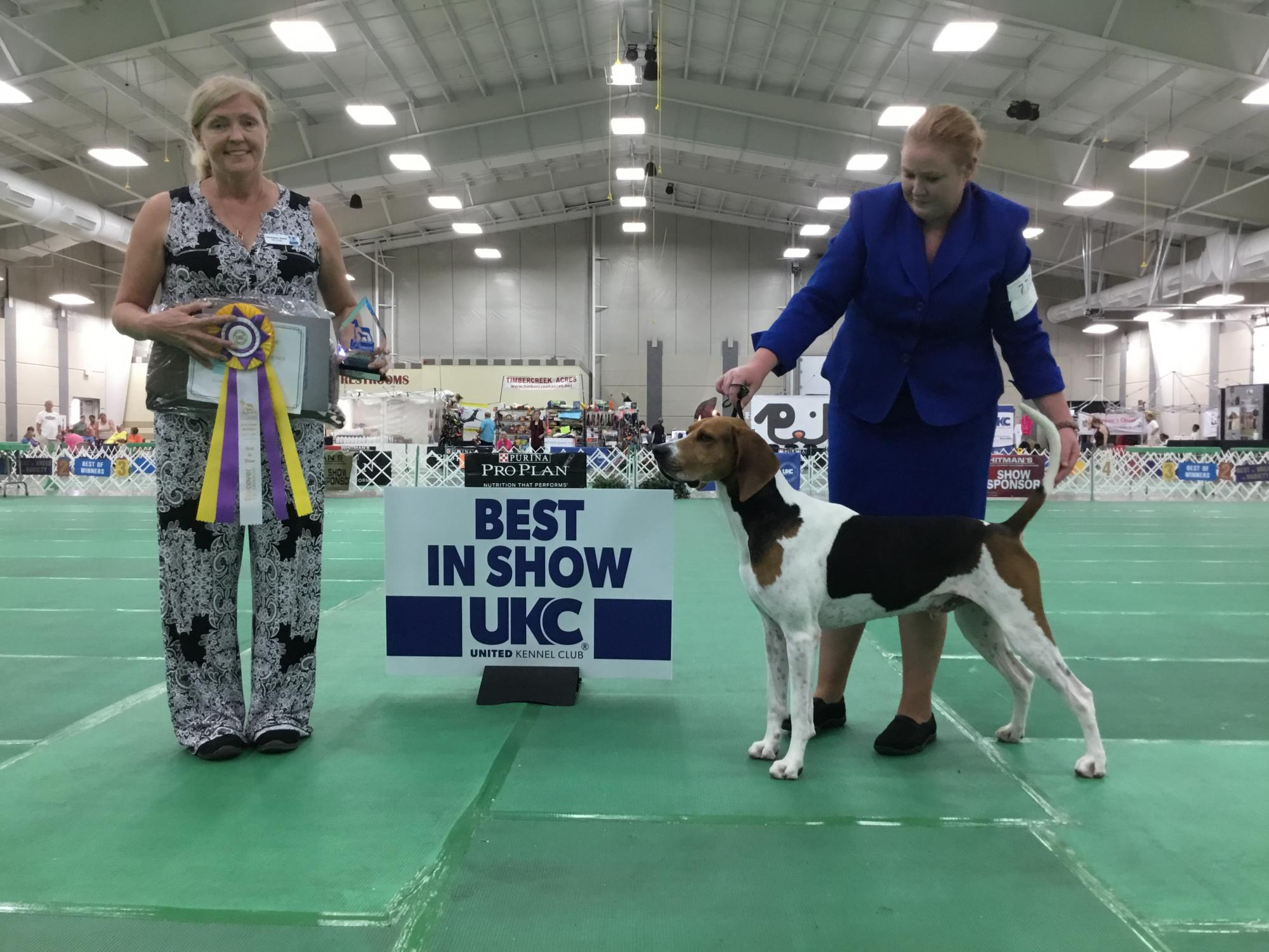 2017 Premier Saturday Best In Show